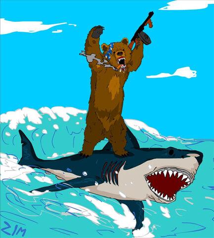 File:Bear-surfing-shark-1-.jpg