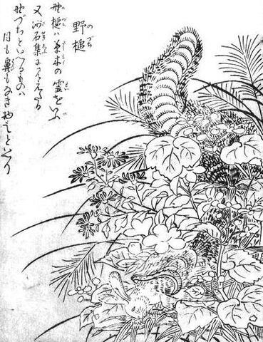 File:SekienNodzuchi.jpg