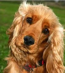 File:Dog2.jpg
