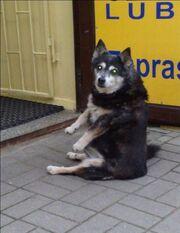 Sitting dog 04