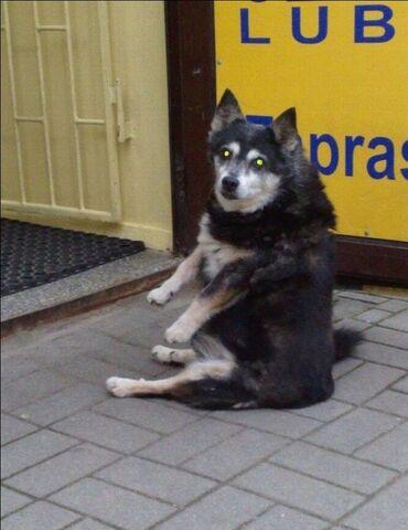 File:Sitting dog 04.jpg