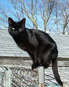 File:225px-Blackcat-Lilith.jpg