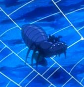 SpiderToken-JP-Anime-5D