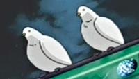 PigeonToken-JP-Anime-DM-NC