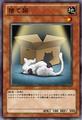 StrayCat-JP-Anime-ZX.png