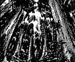 DeepForest-EN-Manga-R-CA