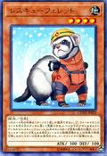 RescueFerret-COTD-JP-R