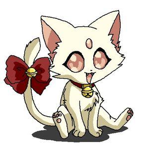 White Petit Kitten2