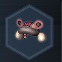 Panda Cap C