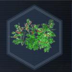 Plant 28