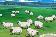 Rushka's and Lily's sheep