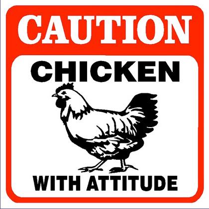 File:Chicken w attitude.jpg