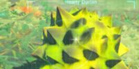 Hearty Durian