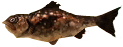 File:Majora's Mask 3D Fish Fragrant Reekfish (Swamp Fishing Hole).png