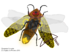 Lunaria false s o l by zephyros phoenix-d39ur4f