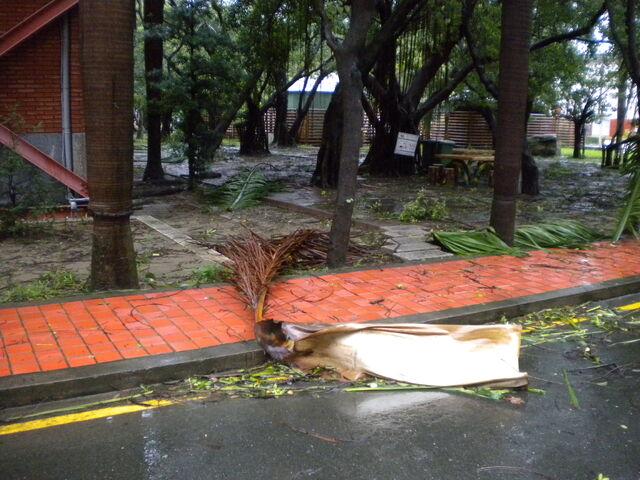 檔案:凡那比颱風的摧殘-南台科技大學12.JPG