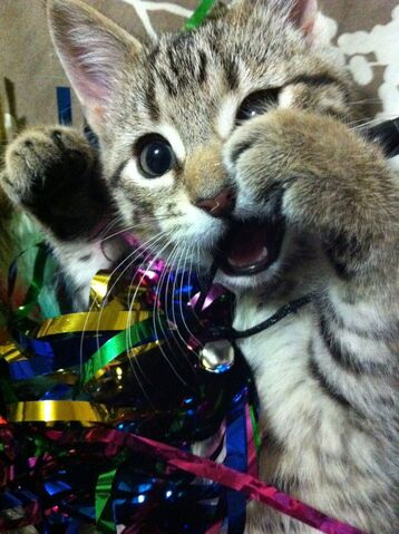 File:Cuteness overload.jpg