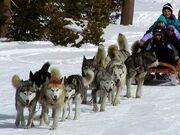 Dog sled 380