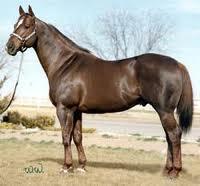 File:Horse one.jpeg