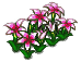 File:White Flower Bed.png