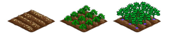 File:Turnip stages.png