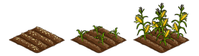 File:Corn stages.png