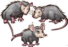 File:Opossum.png