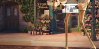 Flora & Fauna/Gallery