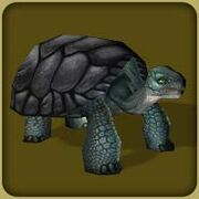 Gaint Tortoise