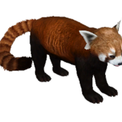 Red Panda remake.