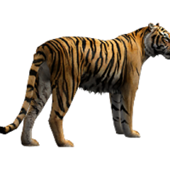 Bengal Tiger remake.
