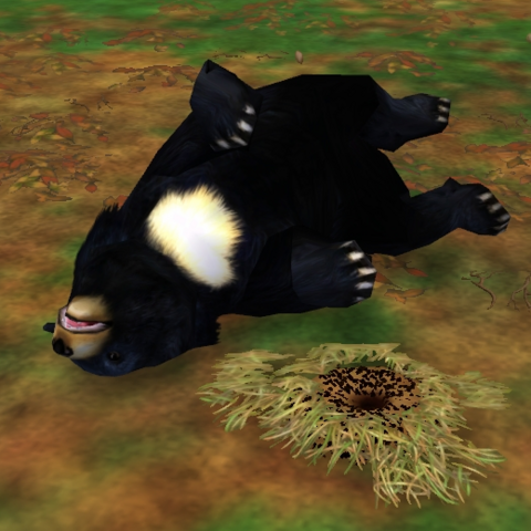 An Asiatic black bear laying on its backside in Zoo Tycoon 2.