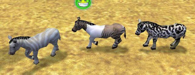 File:Leopard Zebra, Brown and white Zebra, and Graybrown Zebra.jpg