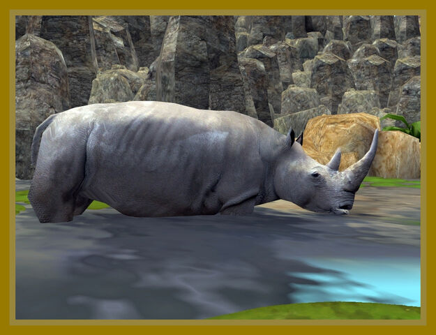 File:Northen White Rhinoceros into the water.jpg