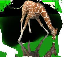 File:Masi Giraffe.png
