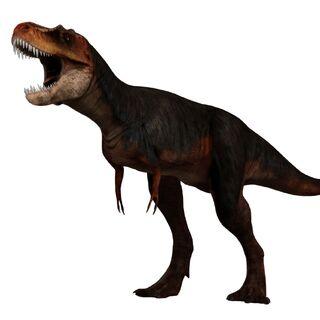 <i>Albertosaurus</i>