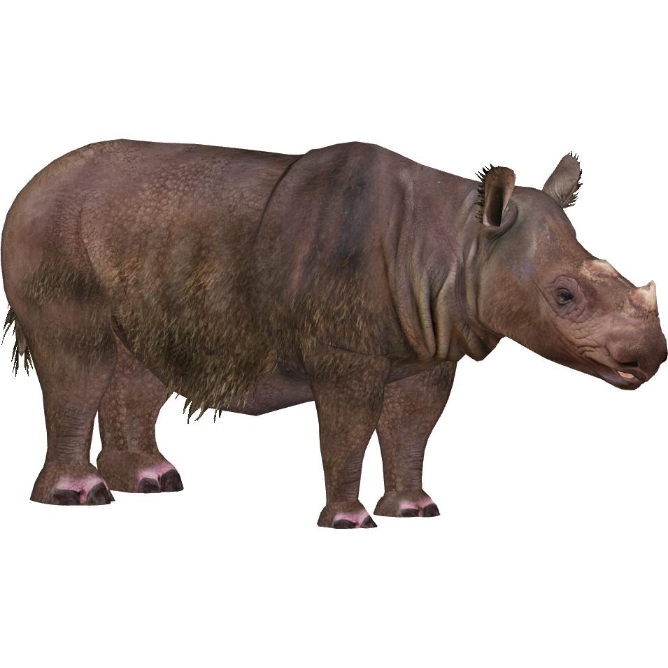 Sumatran Rhinoceros Eryel Zt2 Download Library Wiki