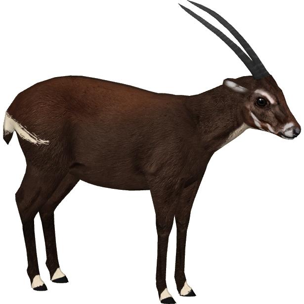 Saola | All Species Wiki | FANDOM powered by Wikia