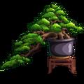 Bonsai Pine-icon.png
