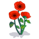 Red Poppy-icon