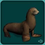 File:California Sea Lion.jpg