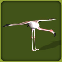 File:Greater Flamingo.jpg