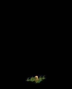 File:Tree 4 (Stump).png